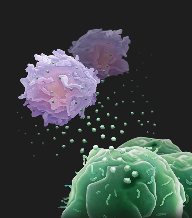 """Cancer cells release """"drones"""" to cripple immune system from afar: study"""