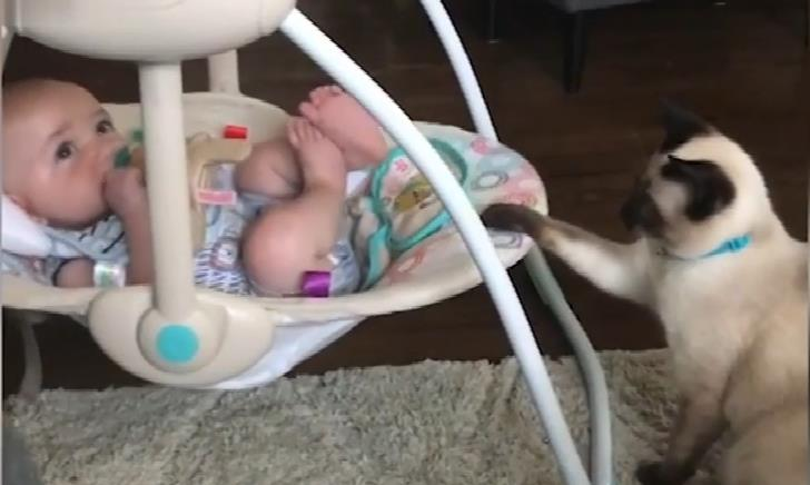 Siamese cat gently rocking a baby to sleep