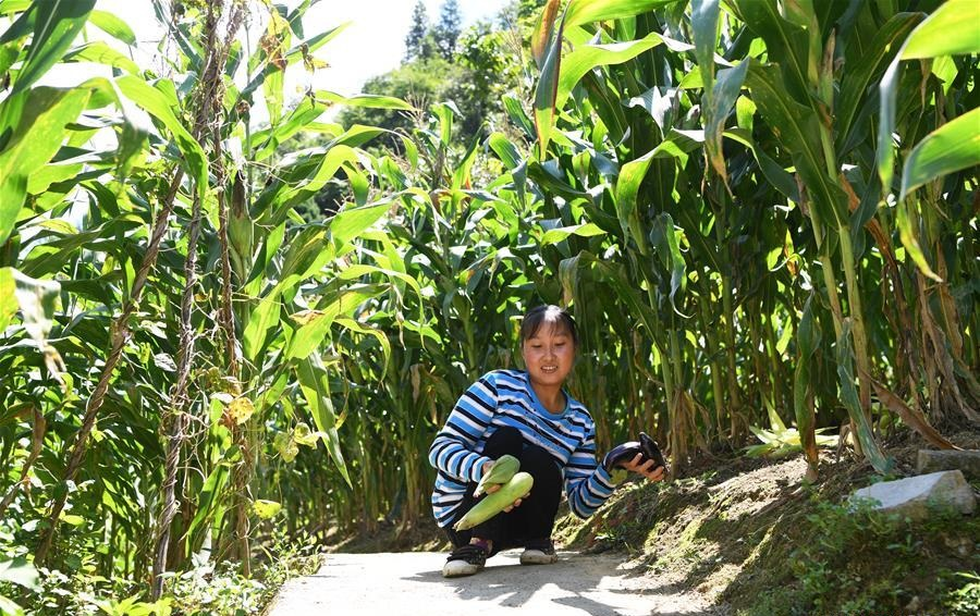 Pic story: disabled female farmer shakes off poverty through hard work