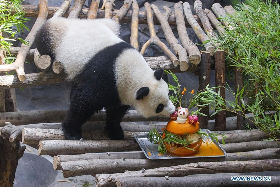 Giant panda twins celebrate 3rd birthday in Nanjing