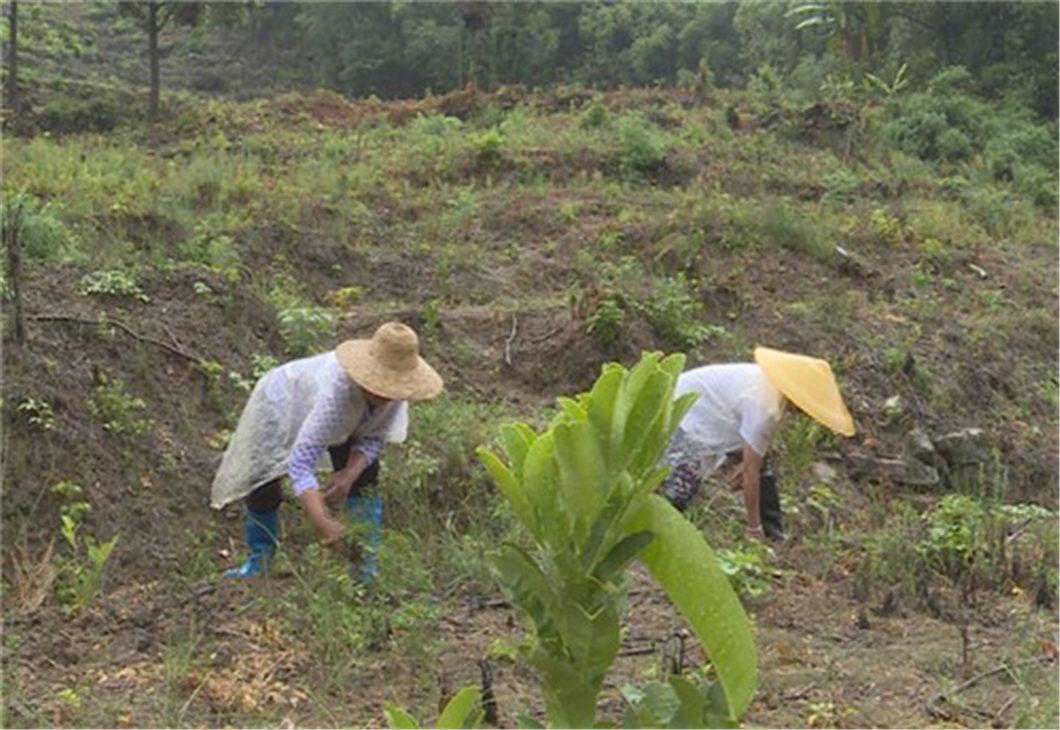 """Villages near Three Gorges """"harvest"""" sunshine"""