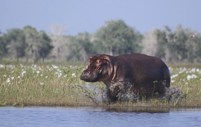 2, including Chinese tourist, killed in Kenya hippo attacks
