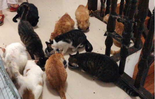 Doctor turned cat lover raises stray-animal awareness