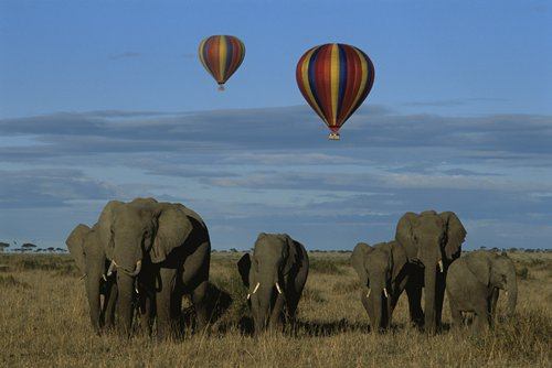 Chinese volunteers boost Kenya's tourism sector