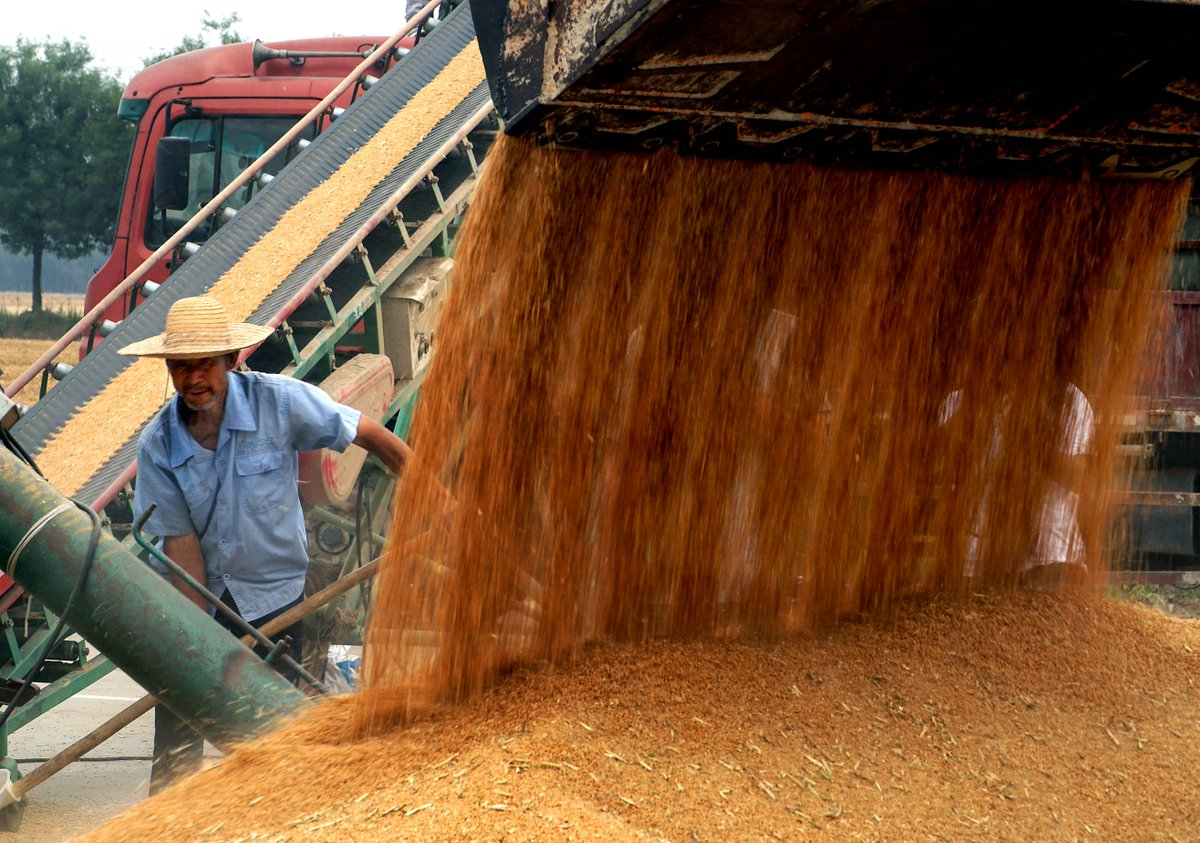 Chinese scientists find key gene to save fertilizer for crops