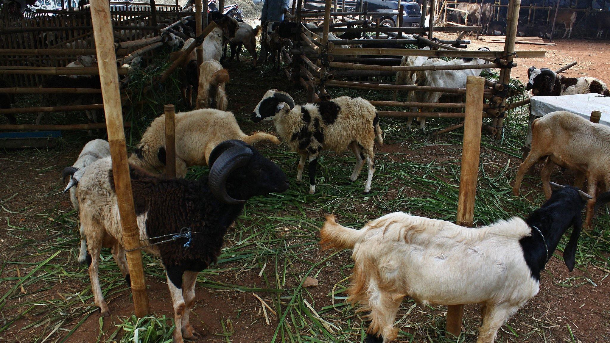 Anthrax outbreak in France kills dozens of animals