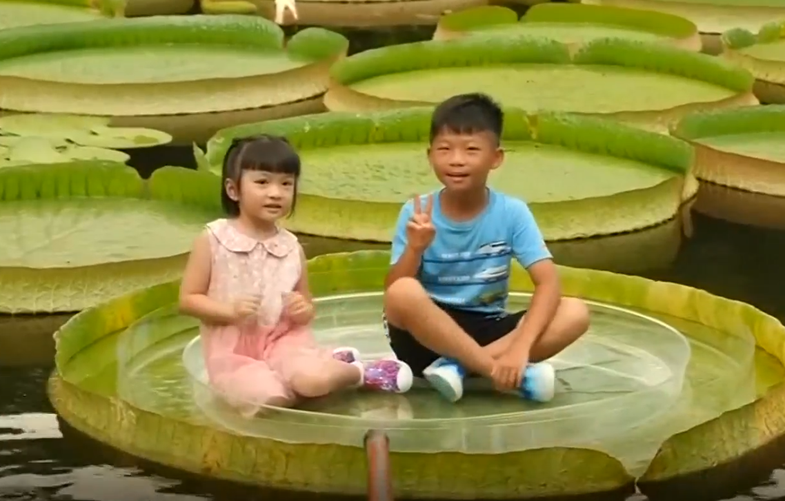 People balance on giant water lily leaf in Taiwan, China