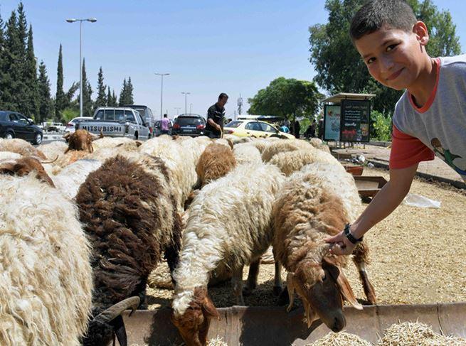 Livestock prices decrease in recaptured Syrian areas during Eid al-Adha