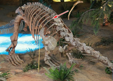 Chinese, American paleontologists discover two new bird-like dinosaurs in Xinjiang