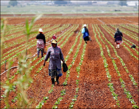 """US attacks S. Africa's land reform as """"down the wrong path"""""""