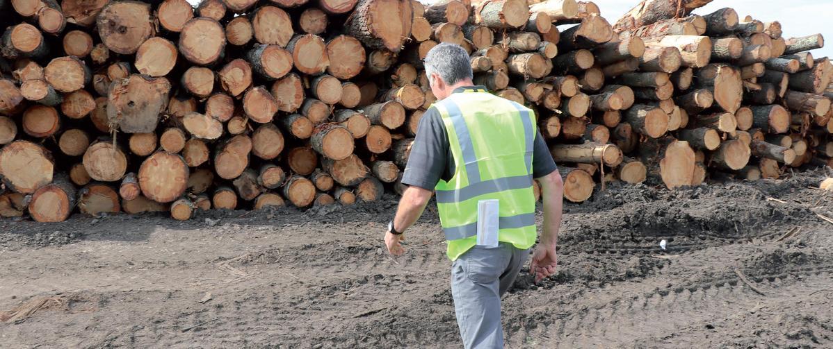 Tariff threat echoes in US hardwood heartland