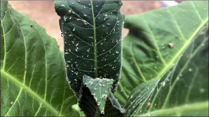 Chinese scientists develop smart app to identify pests on crops