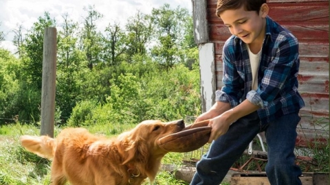 Production begins on sequel to popular dog film