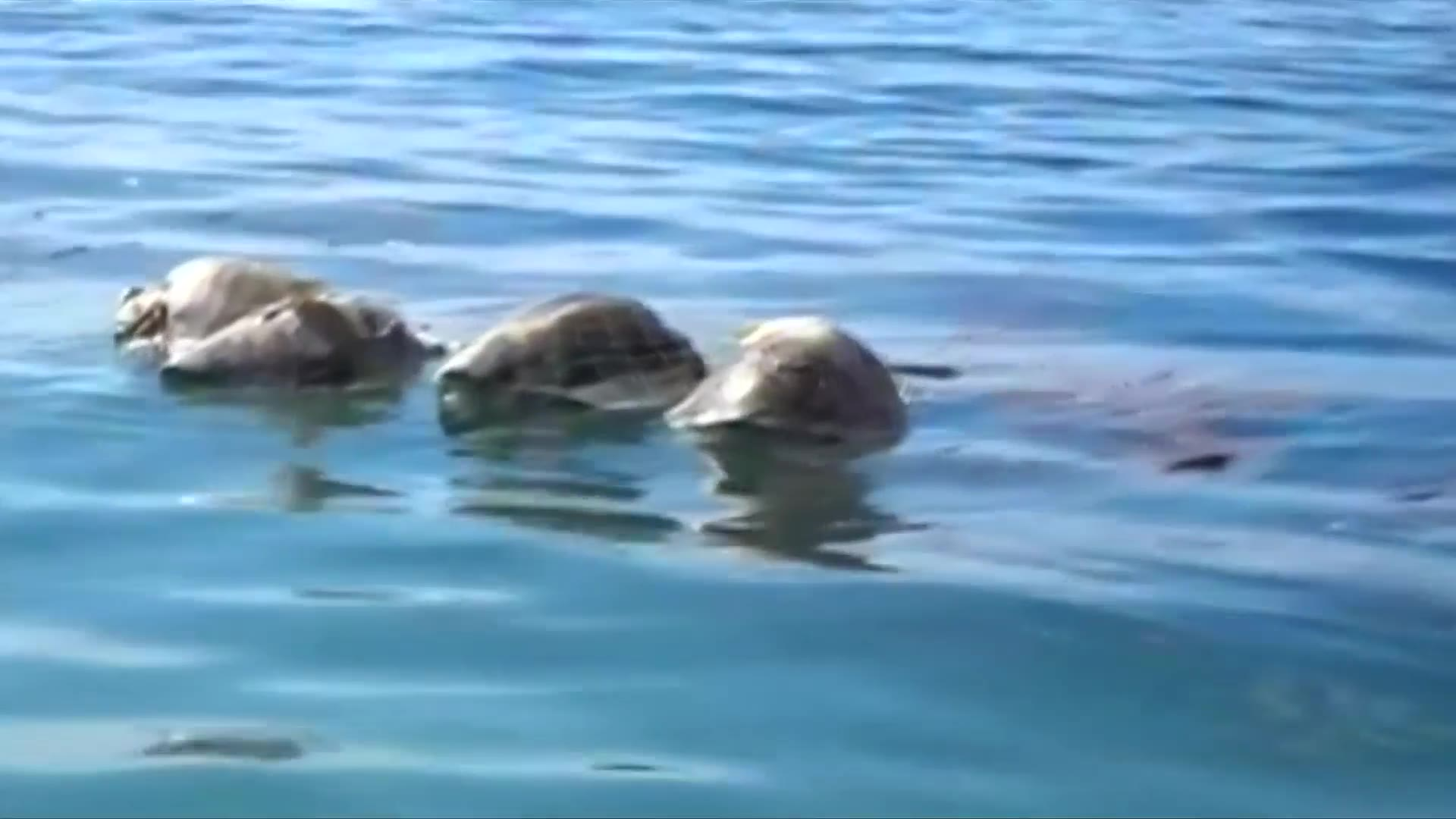 Video: Around 300 endangered sea turtles killed in southern Mexico