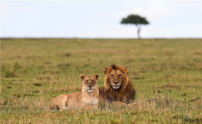 Into Africa, Chinese tourists charmed by natural beauty