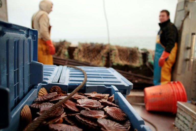 Scallop skirmish erupts between French and British fishermen
