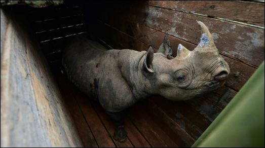 How a plan to save Kenya's rhino left 11 dead in historic blunder