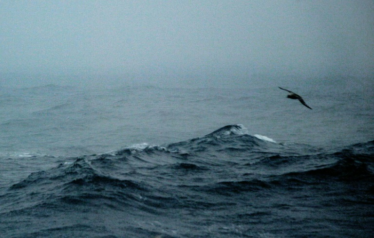 UN set for talks on treaty to protect imperiled high seas