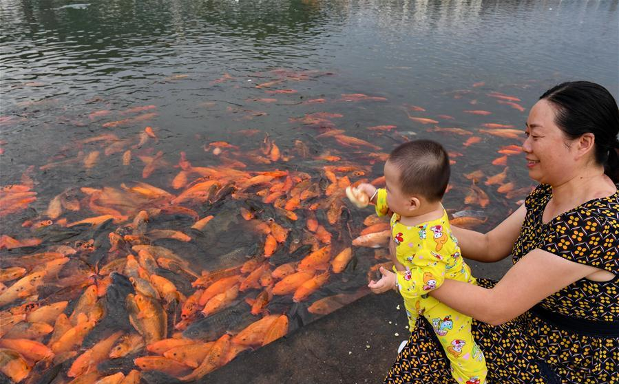 People feed fish by Tongshanxi River in SE China's Fujian
