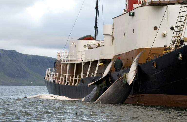 Pro- and anti- whaling nations brace for battle in Brazil