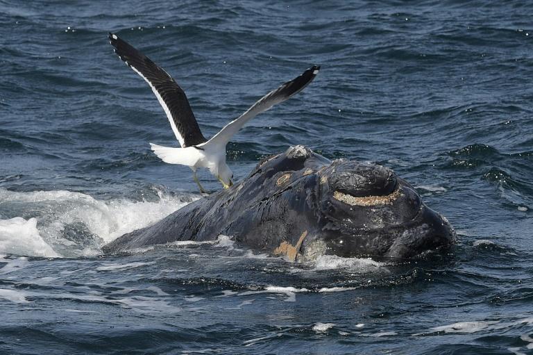 Pro-hunting nations block whale sanctuary bid