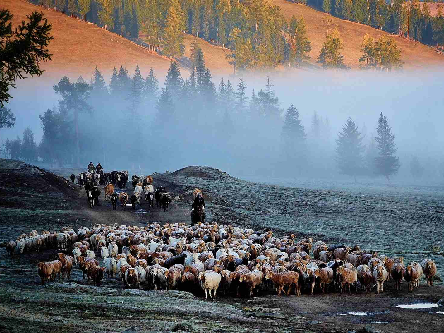 The annual migration for nomadic people in NW China