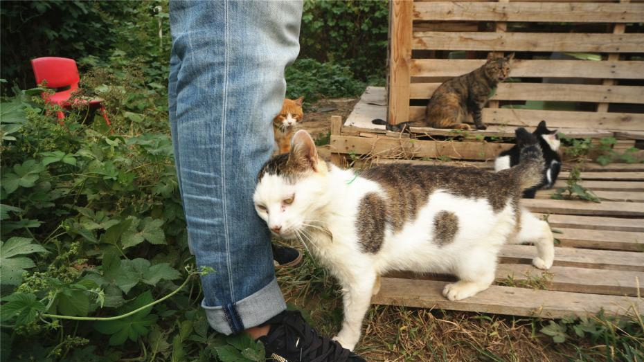 Cat shelter houses 129 homeless furry friends