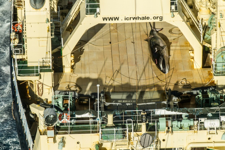 Japan's commercial whaling bid rejected by IWC