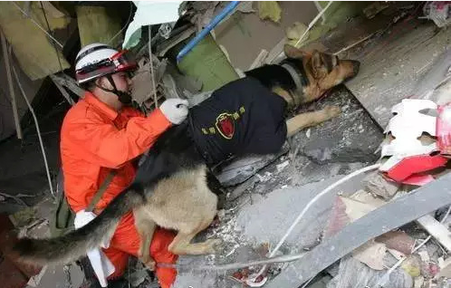 Last Wenchuan search and rescue canine passes away